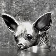 Chihuahua Ring