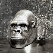 Gorilla Ring