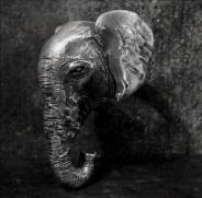 Female Elephant Ring